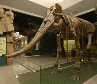 甘肃古生物化石3楼
